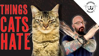 8 Things Cats HATE!