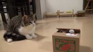 ポチっと押したら猫が出る!? Cat piggy bank and Amie thumbnail