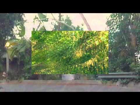 M|O|O|N - Timestamp (Feat. Sara Z)