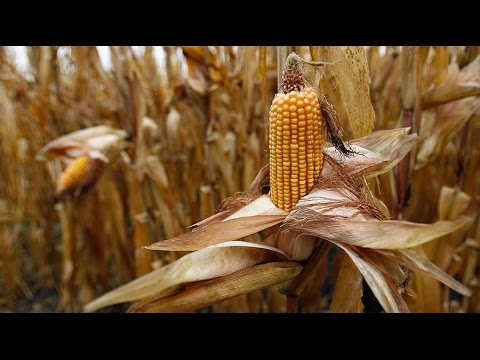 Mystery food: US Senators fight Vermont GMO labeling law