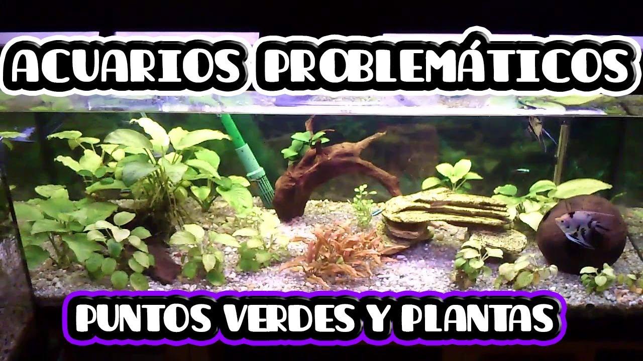 ACUARIOS PROBLEMÁTICOS: ELIMINAR PUNTOS VERDES Y ARREGLAR PLANTAS ...