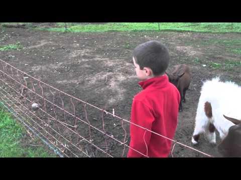 Quintamar Pomar - Goats and Sheep at the Organic Farm.