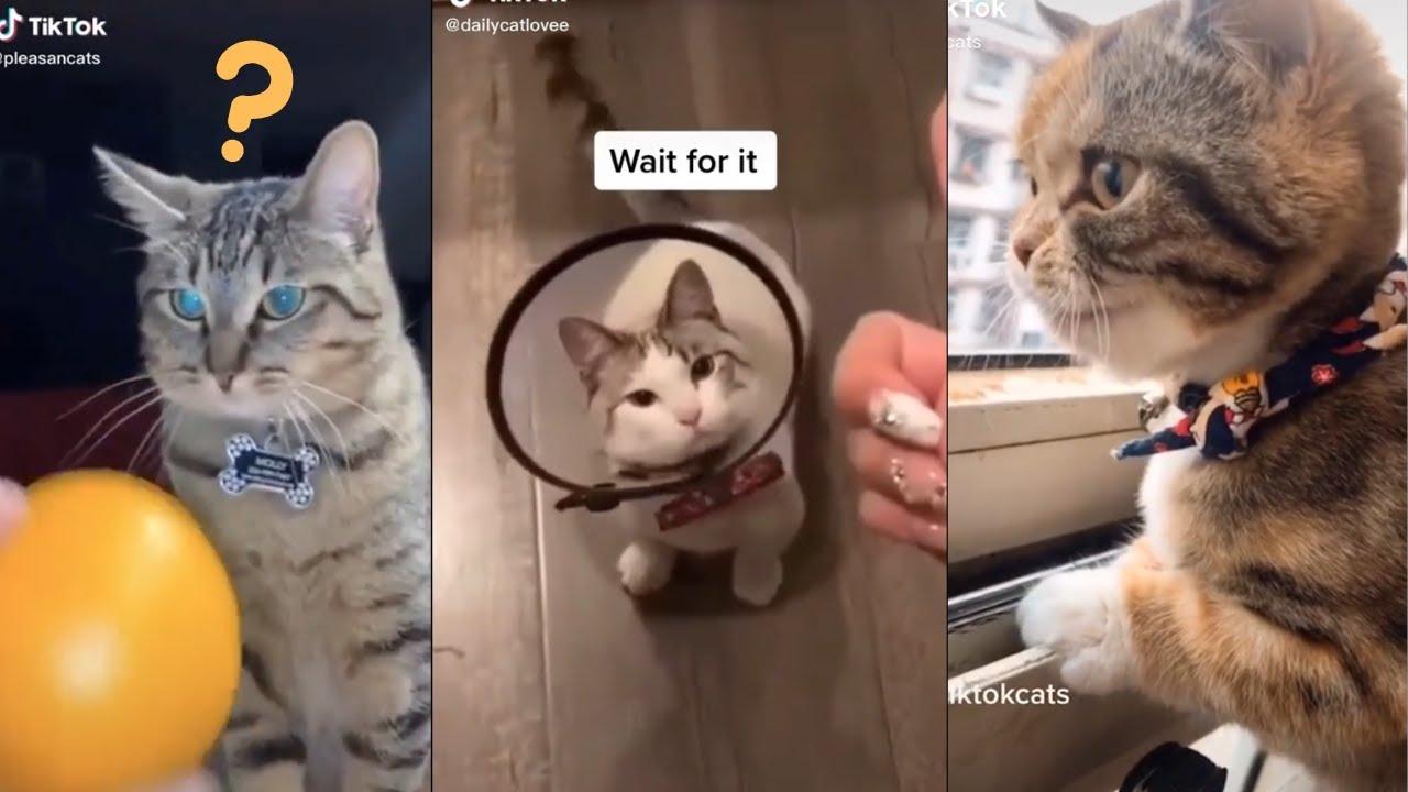TikTok Cats being..CATS😼 Cat Tik Tok Compilation!