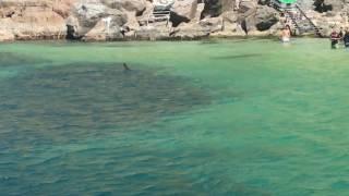 Video Arraial do Cabo -  Peixe Lua na Praia Grande download MP3, 3GP, MP4, WEBM, AVI, FLV November 2017