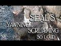 WEIRD SCREAMING SEAL