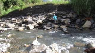 山豬爺爺-打獵過水追蹤0972728310.