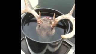 Deer Head Skull Mount - Diy European Style