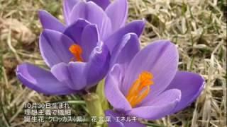 参照サイト:恒星占星術365日誕生日占い http://365uranai.net/ 365日の誕生花 http://www.hibiyakadan.com/hanakotoba/ ラムサ珠玉の言葉 ...