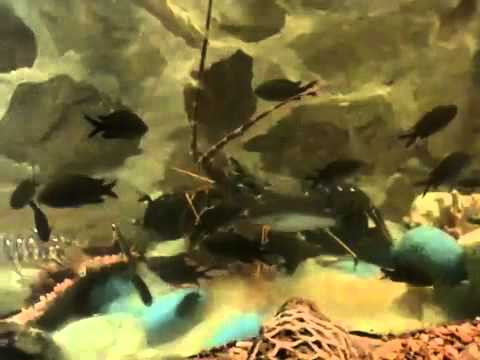 Ibiza's Aquarium