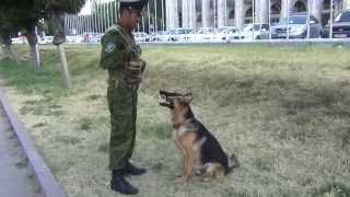собака и кыргызский язык))