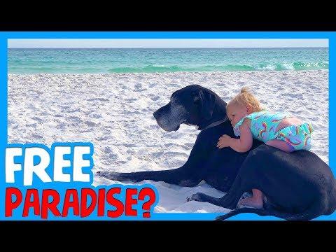 🏖 HOW TO RV FLORIDA BEACHES FOR FREE 🐶 Dog Beach Gulf Breeze Florida 🏕