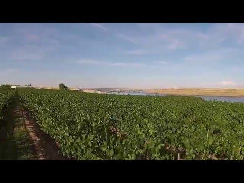 Gordon Estate | Winery | Columbia Valley | Washington State |  Amathus Drinks