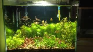 monster aquarium 33 gallon planted tank
