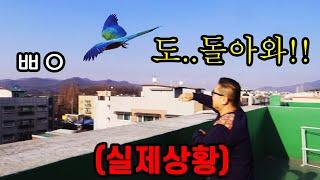 도심에서 막 앵무새 날리는 남자... 이래도 돼??