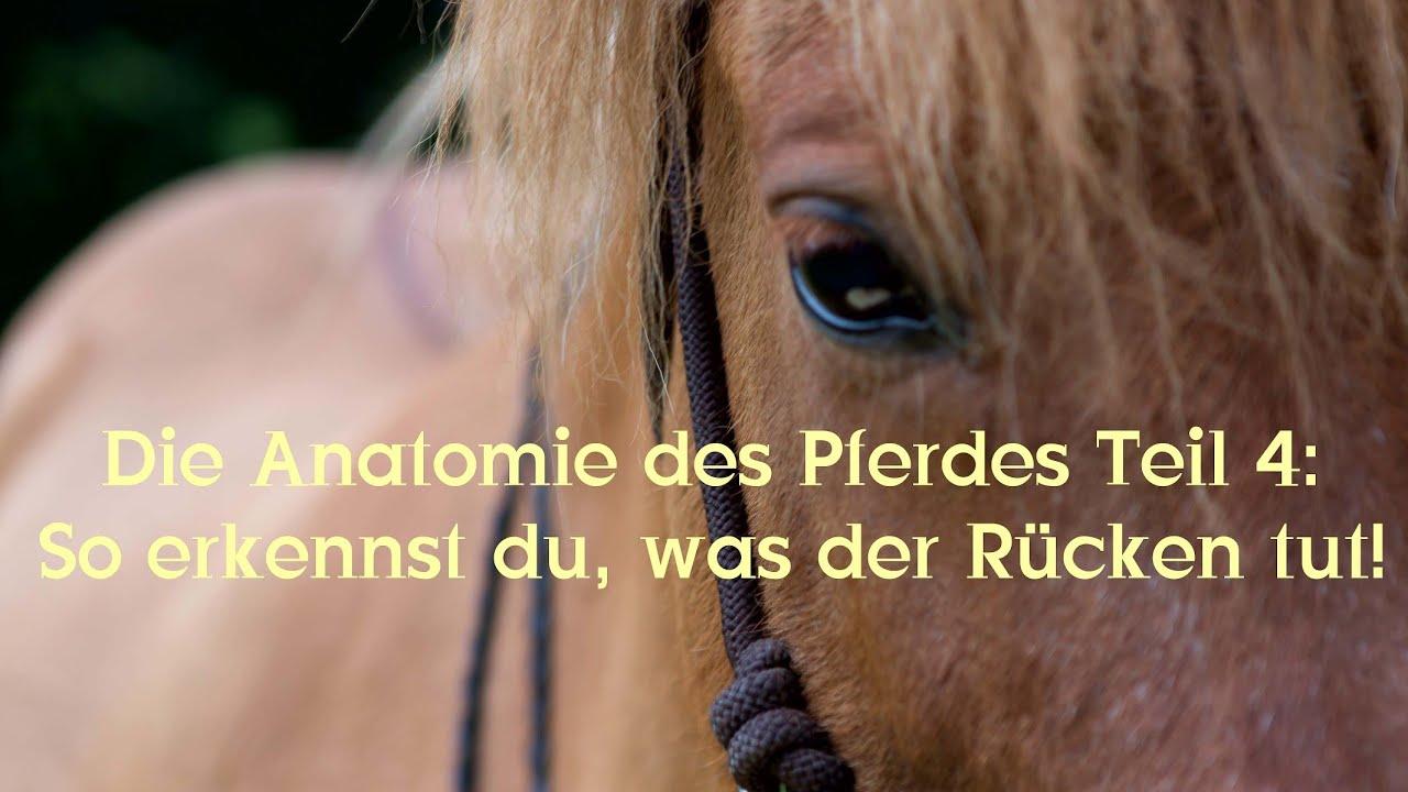 Die Anatomie des Pferdes Teil 4: So erkennst du, was der Rücken tut ...