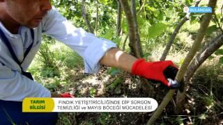 Tarım Bilgisi Fındık Zararlı Mücadelesi 2017