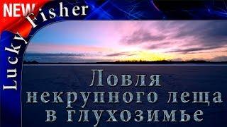 """Ловля некрупного """"леща"""" и густеры на реке в глухозимье / Bream fishing"""