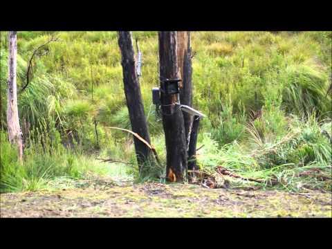 Tasmanian Tiger expedition 2014
