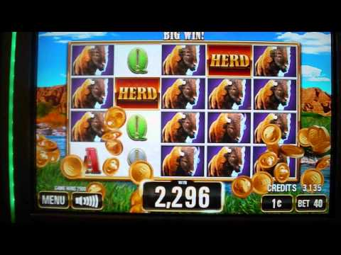 The Herd NEW GAME Buffalo Inspired Slot Machine Line Hit - 동영상