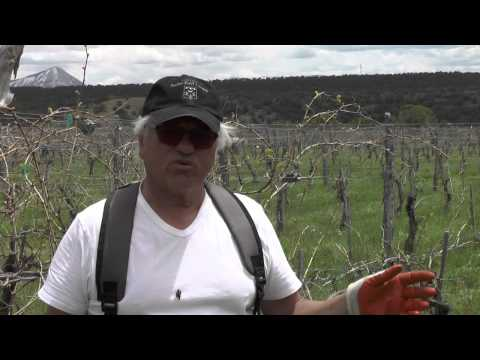 Leroux Creek Vineyards May 2015 Yvon at the Vineyard