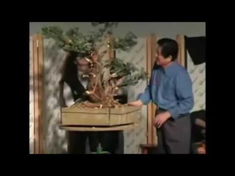Masahiko Kimura, demonstração de bonsai.