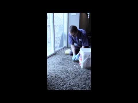 How to Clean Vomit on the Carpet