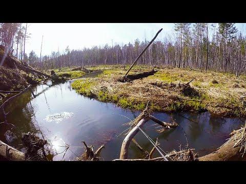 Первая рыбалка сезона и сразу трофей! Щука весной на малых реках .Рыбалка 2018 весна