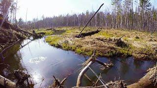Первая рыбалка сезона и сразу трофей! Щука весной на малых реках .Рыбалка на спиннинг