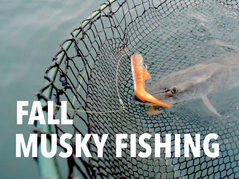 Late Fall Musky Fishing
