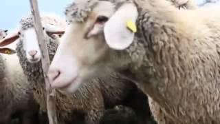 DCVDNS - Der Wolf im Schafspelz (Video)