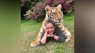 Cute Lions/Tigers/Cheetah Videos Compilation Cutest Animals Moments