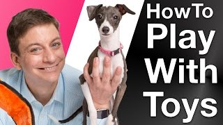 How to Make a Dog Active