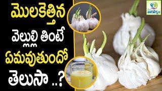 Sprouted Garlic Health Benefits - Health Tips in Telugu || Mana Arogyam
