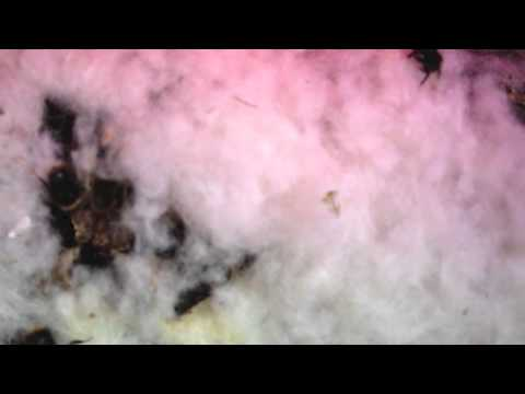 Moving A Live Wild Blebee B Pratorum Nest Video Diary