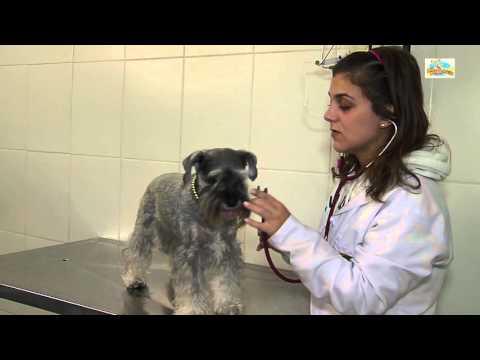 cc16f7a73c25 Banho para Cães e Gatos em Moema - Traga seu pet para o AuauMania