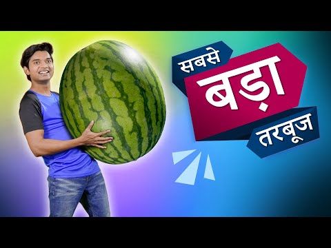 सबसे बड़ा तरबूज World's Biggest Watermelon | Hindi Comedy | Pakau TV Channel