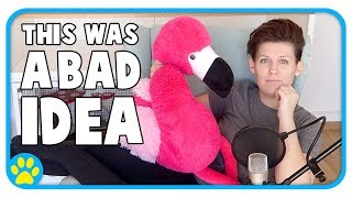 Answering Your Questions Hungover With A 3½ft Neon Pink Flamingo