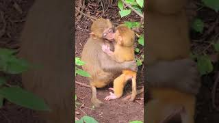 Adorable Baby Monkey Freedom Live With Family And Human