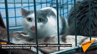 Котейки ищут хозяев: благотворительная акция прошла в Минске
