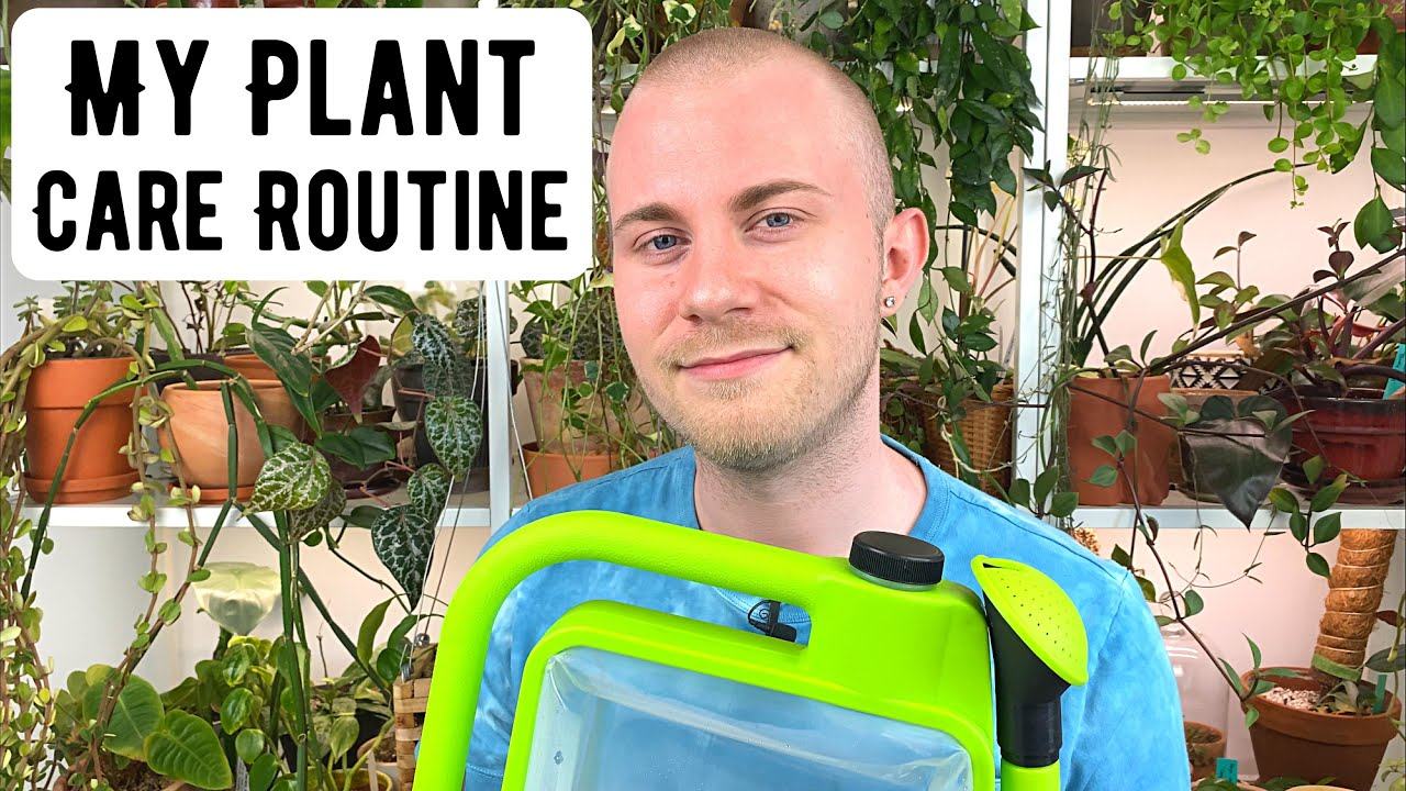 My Houseplant Care Routine