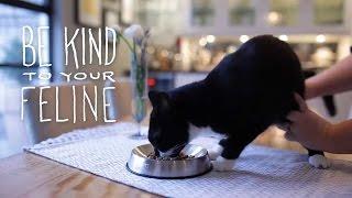おしゃれで食べやすい猫フードボウル「ドクター・キャッツビー」は、猫...