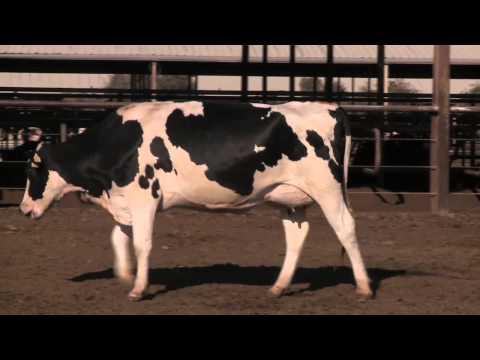 Chapter 6: Animal Health (2013)