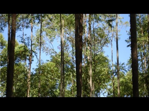 Curso Uso da Madeira de Eucalipto na Fazenda