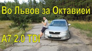 Покупка Шкоды а7 2.0 TDI - Как  купить машину за 1000 км