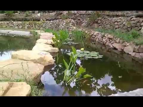 Bio piscina terraranni youtube for Bio piscina