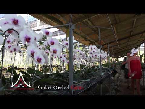 Phuket Attractions - Phuket Orchid Farm