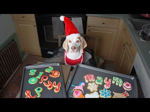 Dog Makes Christmas Cookies: Funny Dog Maymo