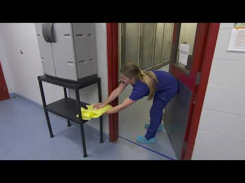 Personal Protective Equipment In An Animal Shelter