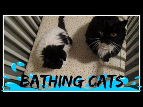 bathing-cats!-|-day-167---11.05.15