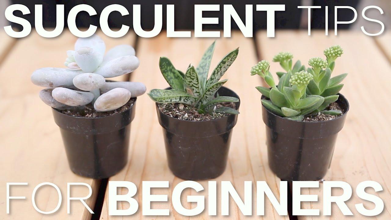 Succulent Tips For Beginners Garden Answer Youtube